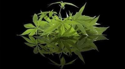 El cannabis llega a la cosmética de los hombres